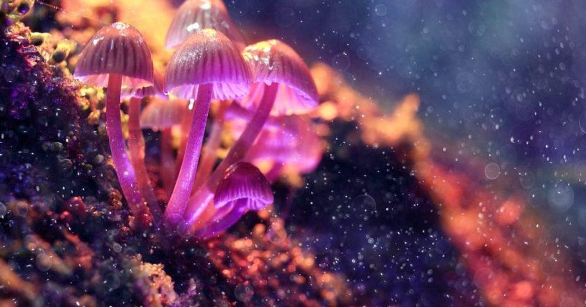 Magic Mushrooms Can Improve Psychological Health Long Term